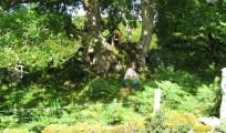 indsmlig af frugtlegemer i Skotland