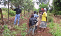 plantevalg Østafrika maj 2015