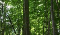 Billede - Skovdyrkning som fremmer